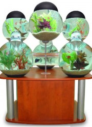 Labyrinth Aquarium: Luxurious home for your fish