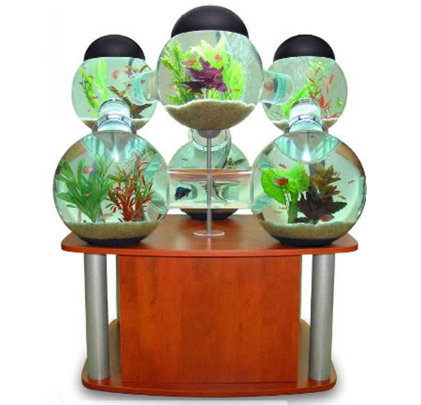 Labyrinth aquarium luxurious home for your fish for Labyrinth fish tank