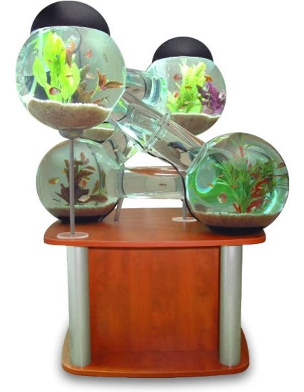 Labyrinth_Aquarium_3