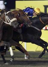 Gloria De Campeao Wins Dubai World Cup – The World's Richest Horse Race