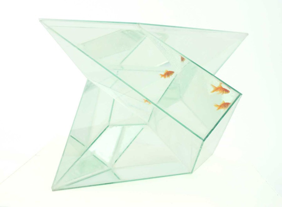 Finite Luxury Aquarium – When the Complicated Geometry Meets an Aquarium