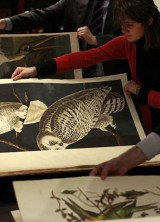 John James Audubon's Birds Of America – The World's Most Expensive Book