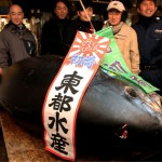 World's Most Expensive Tuna Sells for Record $396,000 in Tokyo