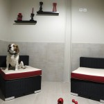 First Luxury Pet Hotel – Parisian Actuel Dogs