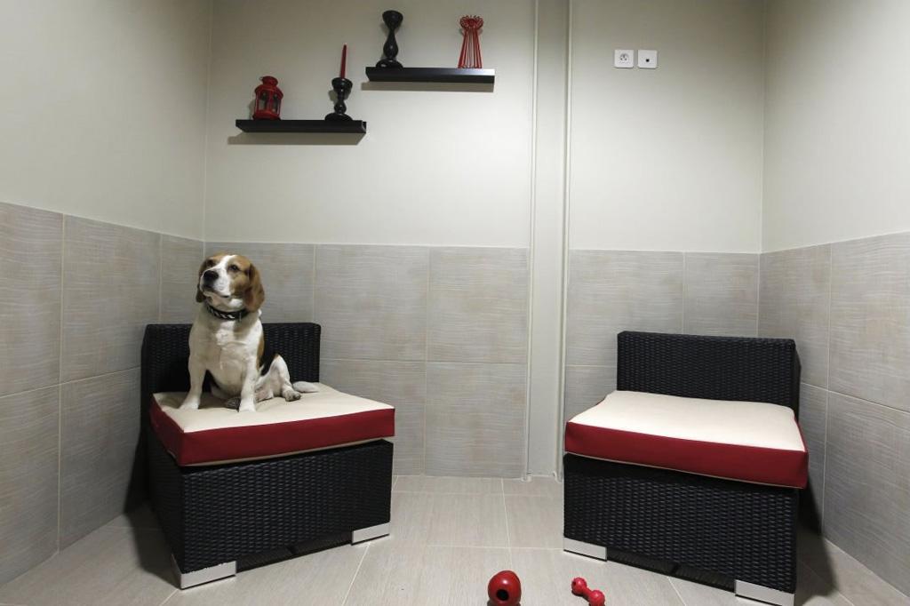 Actuel Dogs - Parisian Luxury Pets Hotel