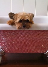 Swarovski Baby Bathtub – Luxury Bath For Your Pet
