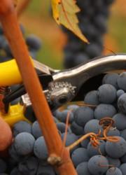 Fetzer Vineyards Sold To Chilean Wine Producer