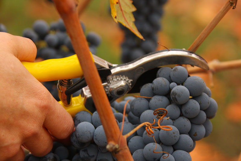 Fetzer Vineyards Sold To Chilean Wine Producer