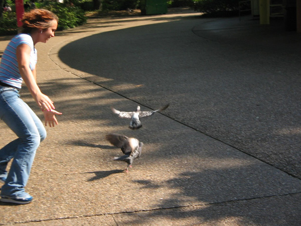 Job: The Pigeon Chaser