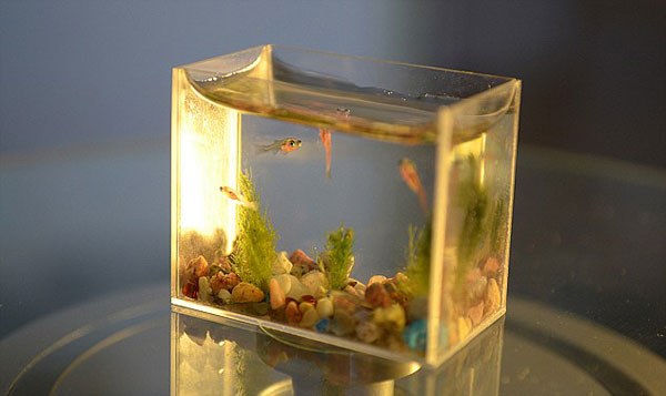 World's-smallest-aquarium-1
