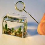 The Smallest Aquarium In The World – Miniature Home For A Fish