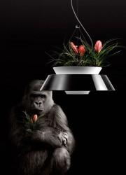 The Eden Flower Pot Pendant Lamp By Torremato
