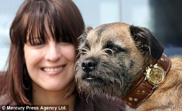Mrs Denney and Border Terrier Smike with his Rolex Dog Collar