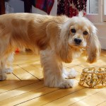 Puppy de Paris – 24 Carat Gold Furniture Collection For A Truly Rich Dogs