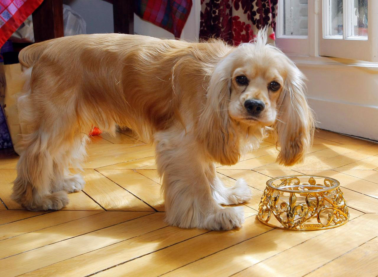 Gold pet bowl (L'Écuelle Royale)