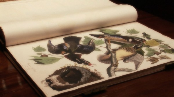 John James Audubon's The Birds of America; from Original Drawings.