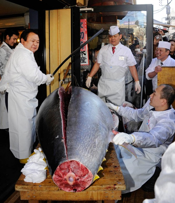 The World's Most Expensive Tuna Fish