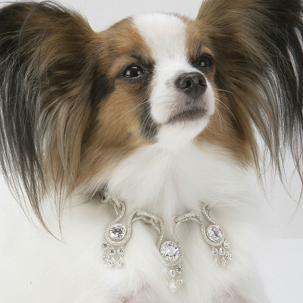 I Love Dogs La Collection de Bijoux, Amour Amour Dog Collar
