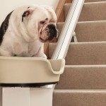 World's First Dogs Stairlift  For Obese Slackers