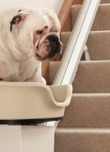 Stairs of the Dog 2022 by MORE TH>N