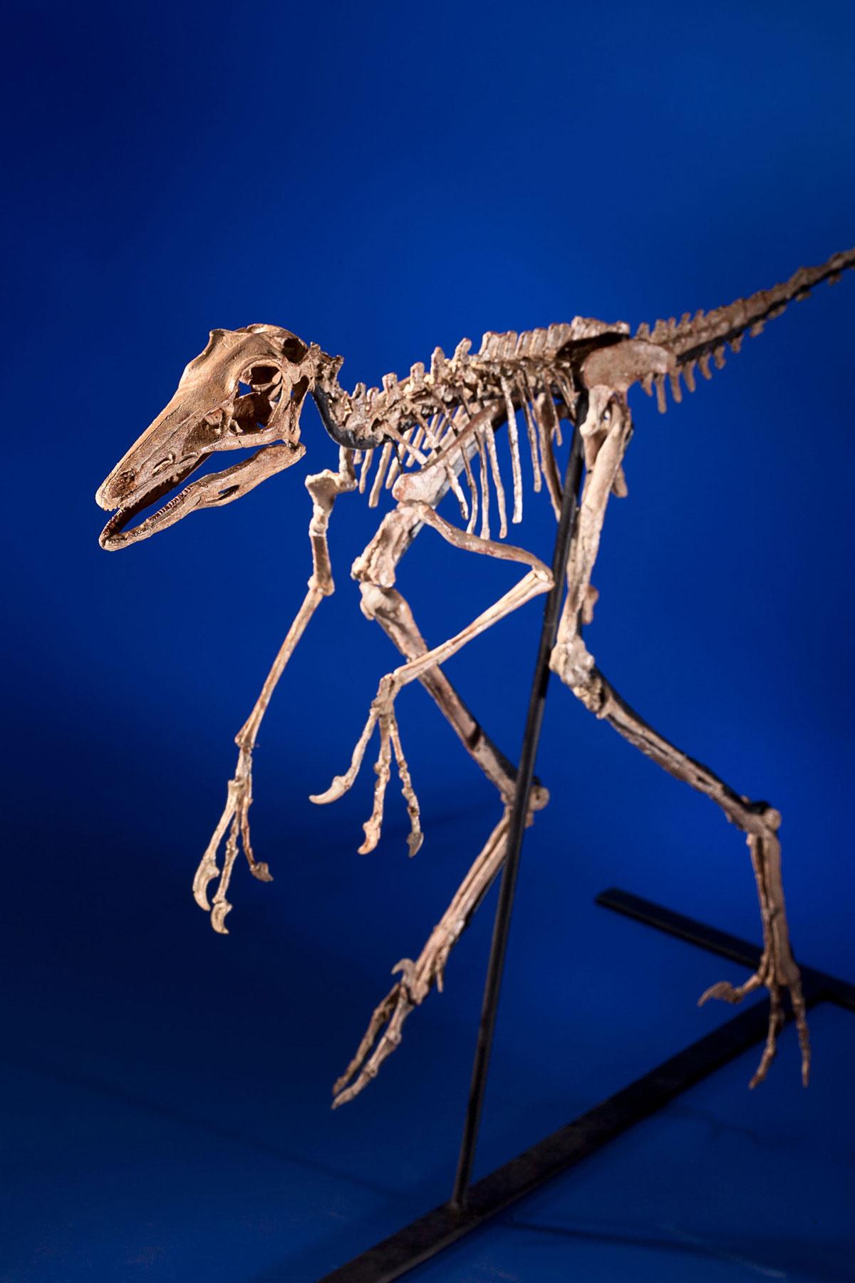 1200 x 1800 jpeg 185kBTyrannosaurus