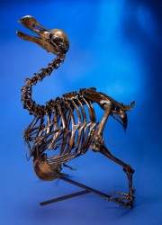 Dodo Bird Skeleton Cast, Raphus cucullatus