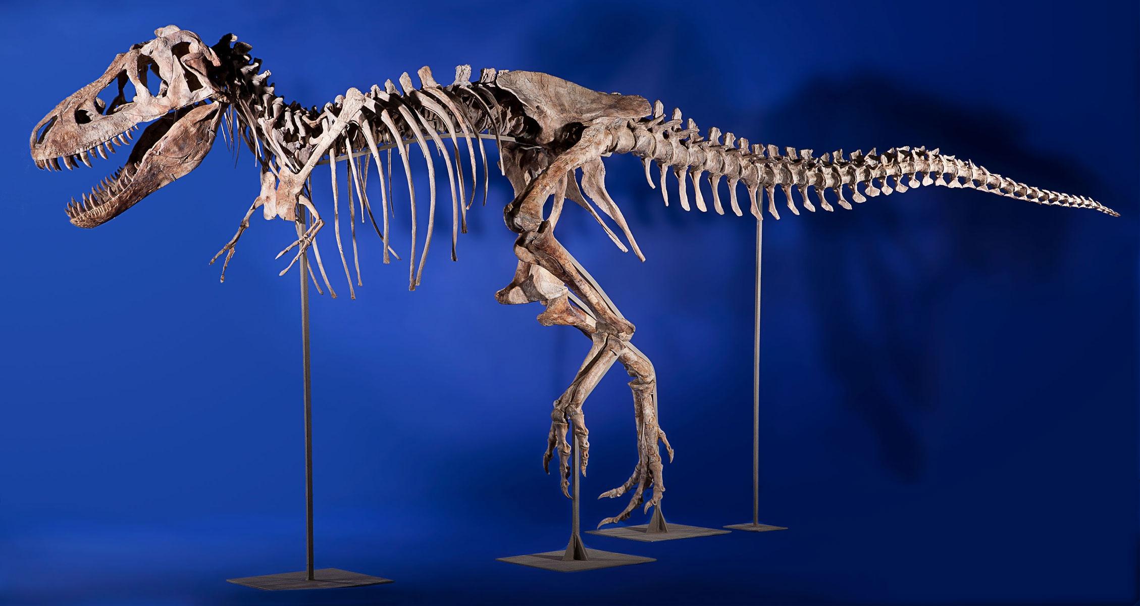 Tyrannosaurus brings 1 052 500 at new york natural for Tyranosaurus