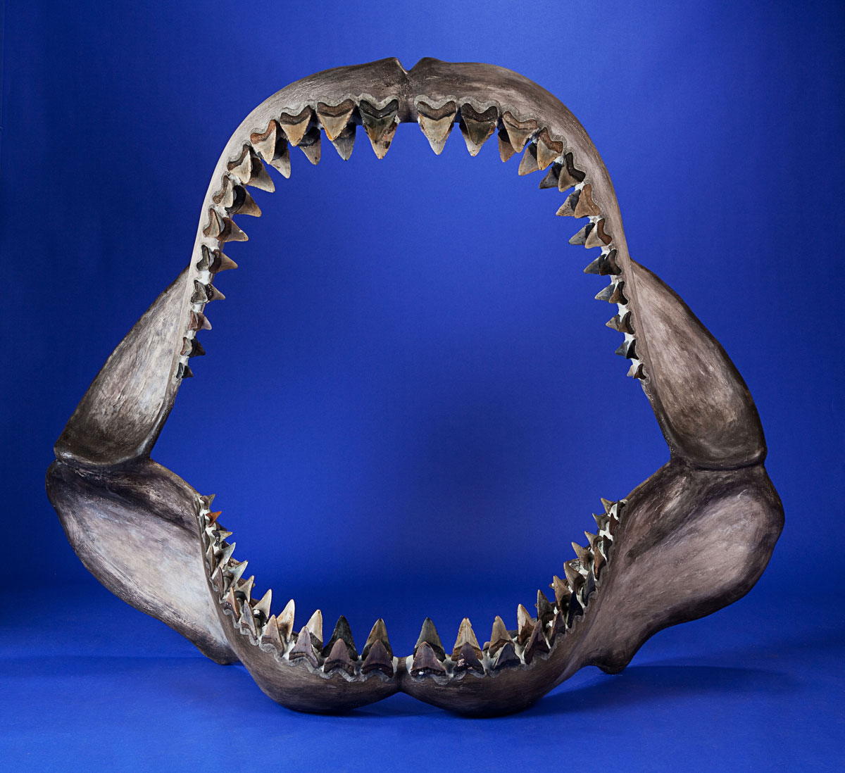 Tyrannosaurus May Bring $1,000,000+ in Heritage Auctions' New York Natural History Event ...