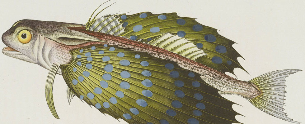 The World&#8217;s Most Beautiful Book on Fish to Fetch $80,000 at Bonhams Angling Sale
