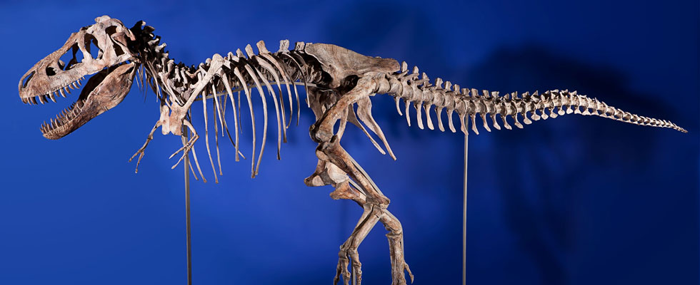 Tyrannosaurus May Bring $1,000,000+ in Heritage Auctions New York Natural History Event