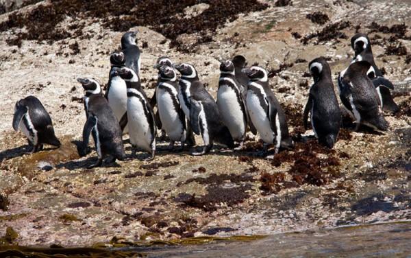Chilean Patagonia Sur Reserves