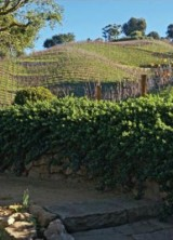 Moraga Vineyards Estate and Winery