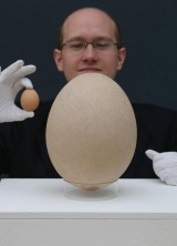 Giant Elephant Bird Egg at Christie's
