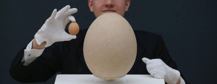 Giant Elephant Bird Egg at Christie&#8217;s
