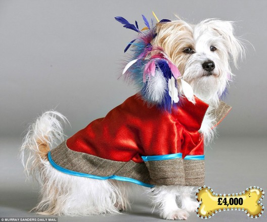 Lilly Shahravesh designs a $6,000 dog coat with ostrich feathers for well-heeled pets