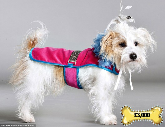 Bespoke Tailor-made Clothes for Your Dog
