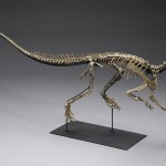 Bonham's Offers American Fossils On Auction