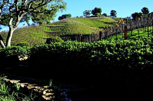 Media Mogul Rupert Murdoch Buys Moraga Vineyards