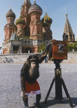 Monkey Photos Sold For $76,000 At Sotheby's