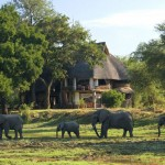 The Million Dollar Safari Package