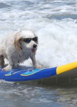 The Pooch Escape – Holiday for Dog Costs $73,500