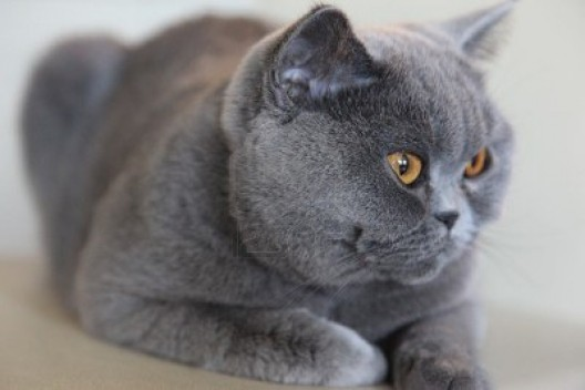 Couple Spends Over 100K to Fly Beloved Cat by Private Jet from Moscow to Boston