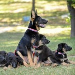 Reunite With Your Puppy – $100,000 for Cloning