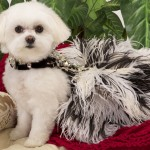 Chien Coature – Luxury Necessities for Small Dogs