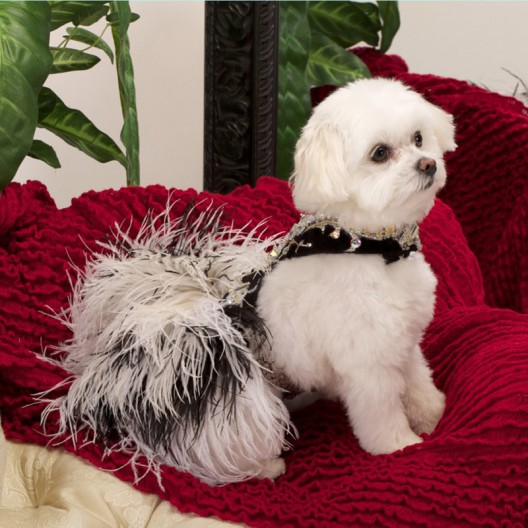 Chien Coature creates Swarovski encrusted canine couture