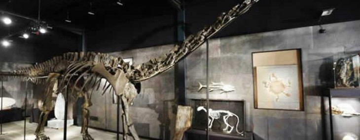 For sale a 60 foot Diplodocus Skeleton for a cool $ 980,000