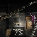 Large and Rare Diplodocus Skeleton Sold for $800,000 at Auction