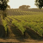 You Want to be the Winemaker? The Wine Foundry in Sonoma Will Help You