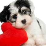 Special Valentine's Day package for You and Your Furry Friend at Topnotch Resort