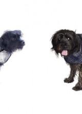 Stylish Pet Winter Coats by Oscar de la Renta